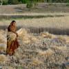 Los precios de importación de los fertilizantes fosfatados cayeron a mínimos históricos por el derrumbe de la demanda asiática