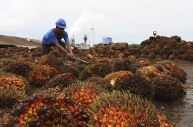 Cuando el mercado colapsa se necesitan políticos: Indonesia planea incrementar en un 165% el subsidio destinado al biodiesel