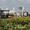 Libertad de elección: catorce de las quince variedades de soja inscriptas en lo que va del año tienen el evento Intacta de Monsanto