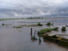 Comenzaron a subir los precios del trigo 2018/19 ante la perspectiva de que el temporal haya arruinado parte la cosecha prevista