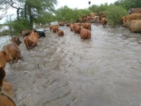 Declararon la emergencia agropecuaria en las cinco provincias afectadas por desastres climáticos