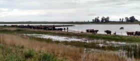 Alerta inundaciones: esta semana se prevén acumulados de hasta 150 milímetros en el NEA
