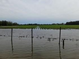 Larga vida a la soja: descendió la superficie asegurada con maíz y girasol a pesar de la quita de retenciones