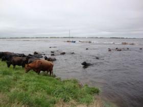 Esta semana no se esperan lluvias en las zonas afectadas por inundaciones