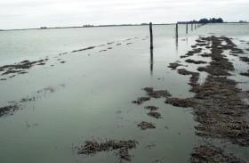 Inundaciones: hace un mes y medio que quince partidos bonaerenses esperan la declaración de la emergencia agropecuaria