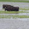 Declaran la emergencia agropecuaria en once partidos bonaerenses con cinco meses de retraso: otros nueve siguen en lista de espera