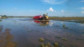 Aviso a la comunidad: productores sojeros inundados transferirán 30% de sus ingresos a pesar de las pérdidas registradas