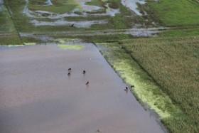 Buena noticia: siguen sin aparecer pronósticos de lluvias sobre las zonas afectadas por inundaciones