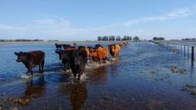 Buena noticia para zonas inundadas: en la semana no se prevén precipitaciones en la región pampena