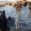 Buenos Aires no tiene obras para evitar inundaciones: tampoco cuenta con una red de contención para desastres naturales