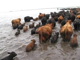 El mejor momento para hacer las canalizaciones en la Cuenca del Salado fue durante la última gran seca bonaerense: ahora ya es tarde