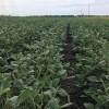 El bloqueo comercial al biodiesel argentino impulsó los precios de la soja en EE.UU: pero los especuladores siguen apostando contra la oleaginosa