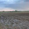 Revivió el valor del maíz ante la posibilidad de que buena parte del cereal estadounidense quede sin sembrar por las inundaciones