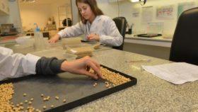 Extendieron el sistema Bolsatech para la campaña de soja 2019/20: qué implica para los productores