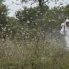 Los productores ahora están obligados a controlar langostas en sus campos: multas de hasta 10 M/$ para los infractores