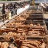 """El gobierno reconoce que tiene dificultades para controlar la evasión en el mercado interno de carne: prometen hacer """"revisión integral"""" del padrón de matarifes abastecedores"""