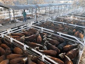 La intervención del Mercado de Liniers comenzó a reflejarse en los precios negociados