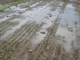 Siguen las complicaciones para sembrar: esta semana prevalecerán las lluvias sobre las principales regiones productivas
