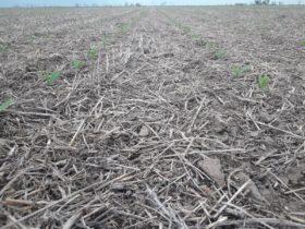 Se vienen aportes de agua significativos para consolidar la siembra de maíz temprano: aunque Córdoba deberá seguir esperando