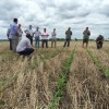 """Todo indica que no será conveniente hacer caja con el maíz en cosecha: se está preparando un nuevo """"corralito"""" cerealero"""
