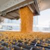 """Alerta comercial: crece el """"castigo"""" presente en los precios de maíz tardío 2020/21 ante la perspectiva de un eventual aluvión de oferta"""