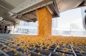 Esta vez la demanda real se llevó puesto a los especuladores: fondos tiran la toalla para comenzar a construir apuestas alcistas en maíz