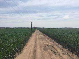 Los cultivos piden agua: recién para el viernes se esperan precipitaciones importantes en la región pampeana