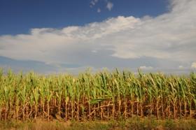 Se acabó la espera: por fin regresan las lluvias a las zonas necesitadas de agua de la región pampeana