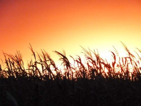 En lo que va del año el déficit energético reconocido por el gobierno superó los 4200 M/u$s: el agro ya no puede compensarlo por el default cerealero