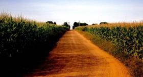 Gobierno brasileño libera 220 M/u$s para asegurar precios mínimos a productores de maíz: alcanza para más de 13 millones de toneladas en Mato Grosso