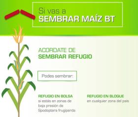 Argentina al revés: los menores niveles de cumplimiento de refugios de maíz se registran donde más se los necesita