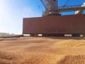 """Dato: el complejo cerealero argentino logró empatar al sojero en la generación de divisas gracias al """"efecto arrastre"""""""