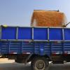 Factor bajista: China comenzó a rechazar el ingreso de granos destilados de maíz que contengan un evento no aprobado de Syngenta