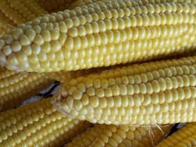 Una máquina de hacer dólares: en apenas tres días el gobierno recaudó 50 M/u$s con retenciones anticipadas de maíz