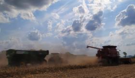 Los precios del maíz temprano argentino se divorcian de EE.UU. en plena cosecha para alcanzar valores mayores a los presupuestados
