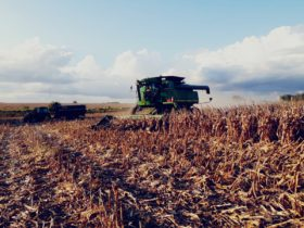 Tiempo ideal para avanzar con la cosecha gruesa: no se prevén precipitaciones