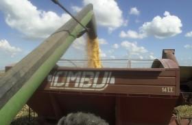Se busca maíz de manera urgente: la retención efectiva del cereal es del 12,5%