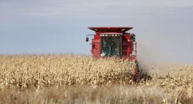 Los productores que vendieron maíz tardío en cosecha pudieron obtener un ingreso adicional de 1600 $/ha gracias al empleo de la tecnología comercial