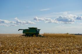 Ya se cubrió un 86% del saldo exportable de maíz 2015/16: nadie se quiere quedar afuera del negocio