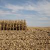 Con las nuevas tarifas el flete representa un tercio del precio del maíz en el NOA: incentivo fenomenal para transformarlo en carne