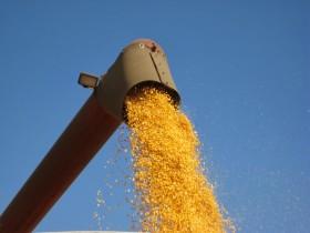 El gobierno ya habilitó casi el 30% del cupo de exportación de maíz 2013/14
