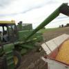 Operadores especulativos refuerzan apuestas bajistas en maíz ante el ingreso inminente de una gran cosecha sudamericana al mercado global