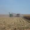 Se vienen varios días sin lluvias: ideal para avanzar con la cosecha gruesa