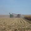 Cuenta regresiva: en apenas dos días se cubrió el 23% del segundo tramo de la cuota de exportación de maíz 2014/15