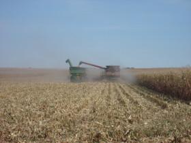 Ya se cubrió un 75% del saldo exportable de maíz 2015/16: Cofco y Cargill concentran más de un 30% de las compras