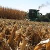 Gracias productores: con los rindes de maíz logrados en la zona núcleo muchos pagarán casi lo mismo de retenciones que el año pasado