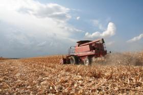El gobierno está cubierto contra el derrumbe del precio del maíz: cobró retenciones anticipadas en los momentos más convenientes del año