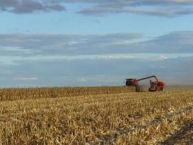 Carpe diem: la ampliación del cupo de exportación de maíz generó una resurrección parcial de los precios del cereal