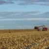El gobierno ya habilitó un 24% del cupo de exportación de maíz 2013/14: recaudó 140 M/u$s por retenciones anticipadas