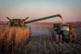 El cereal amarillo es la nueva estrella del mercado: administradores de fondos agrícolas ya están más comprados en maíz que en soja